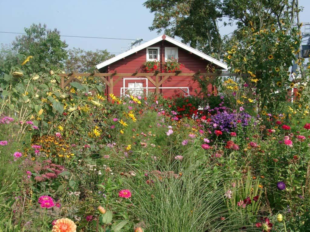 Buntes Blumenmeer im Kleingarten