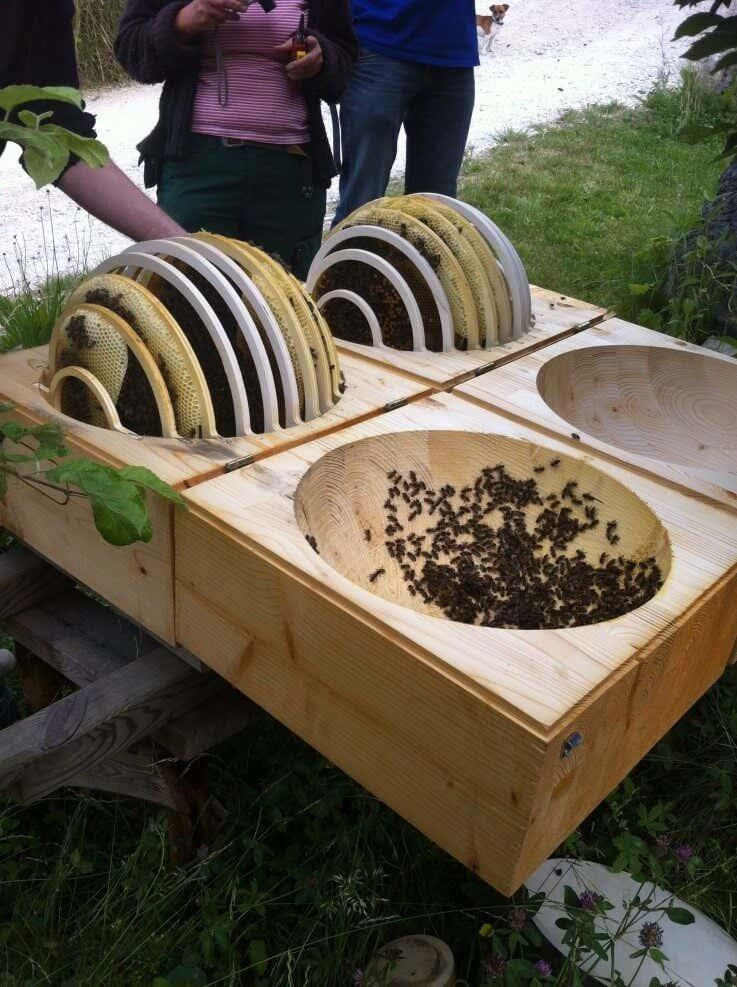 Bienenstöcke mit hauseigener Bienenzucht