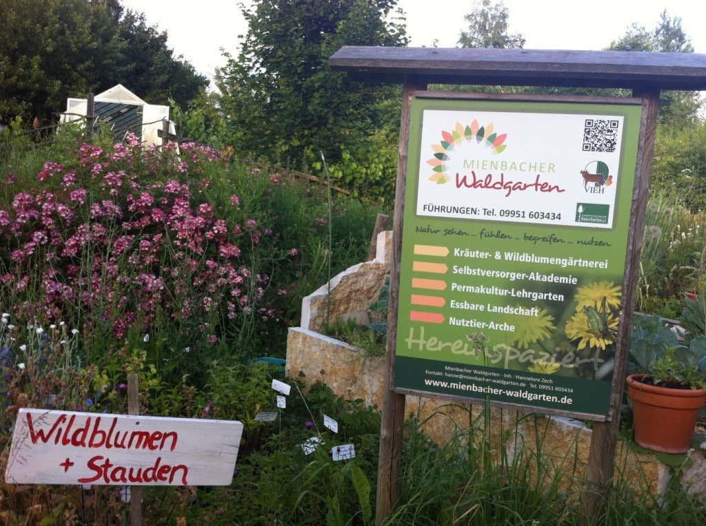 Wildblumen und Stauden im Permakultur-Lehrgarten
