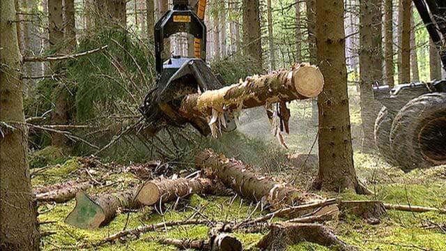 Rodung des Holzes