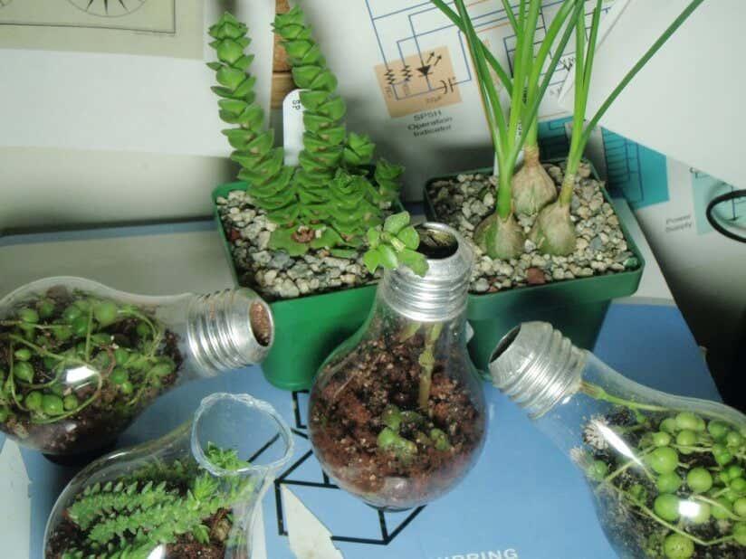 Upcycling 11 Kreative Ideen F 252 R Ihre Pflanzen