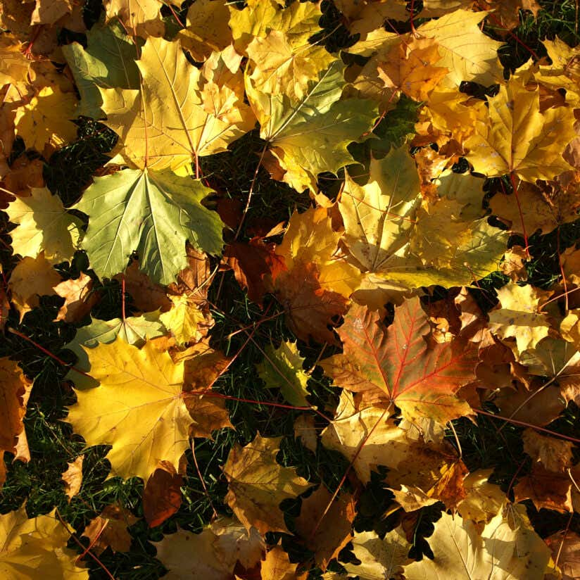 Laub-Blätter im Herbst