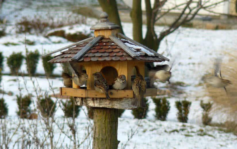 Garten Im Winter heimische tiere im garten überwintern lassen