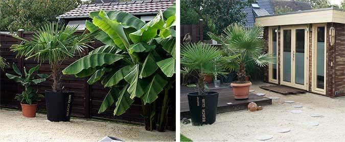 Palmen und Bananenstaude