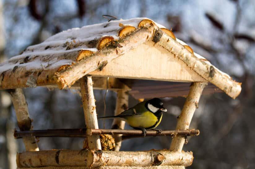 Standort Furs Vogelhaus Alles Was Sie Wissen Mussen