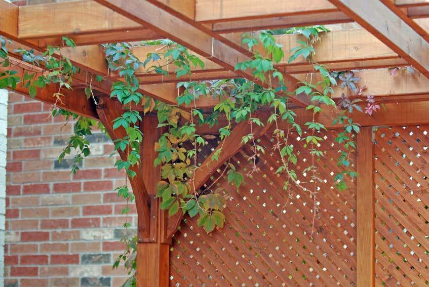 Sichtschutz selber bauen: 5 DIYs aus Naturmaterial