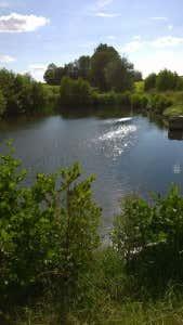 sommerlicher-Naturweiher