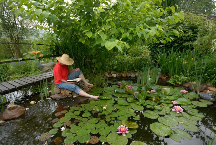Teich Anlegen Tipps Zu Planung Bepflanzung Und Mehr
