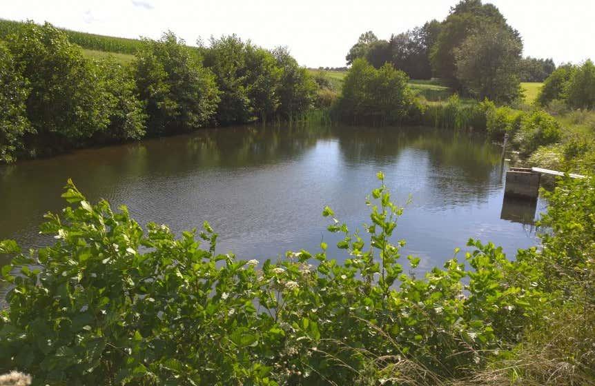 Teich anlegen tipps zu planung bepflanzung und mehr - Bilder von gartenteichen ...