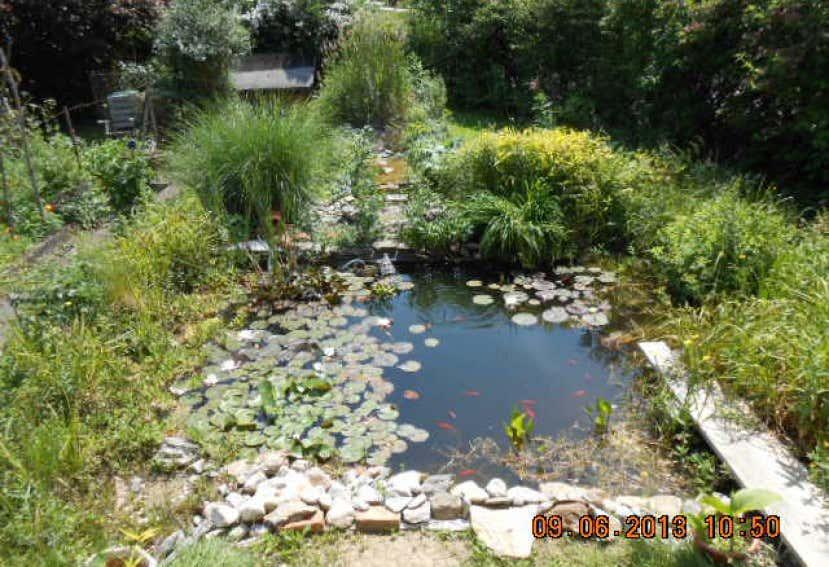 Teich anlegen tipps zu planung bepflanzung und mehr for Kleine gartenteiche beispiele