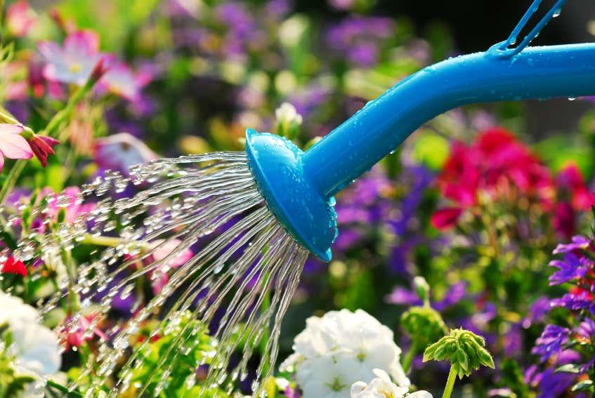 Blaue Gießkanne gießt Hochbeet