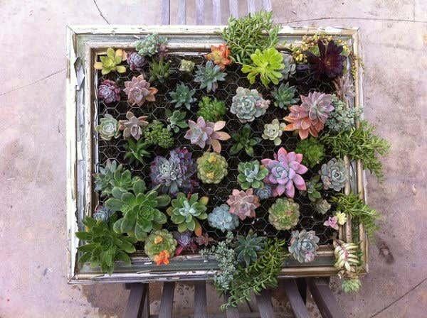 Garten im Bilderrahmen