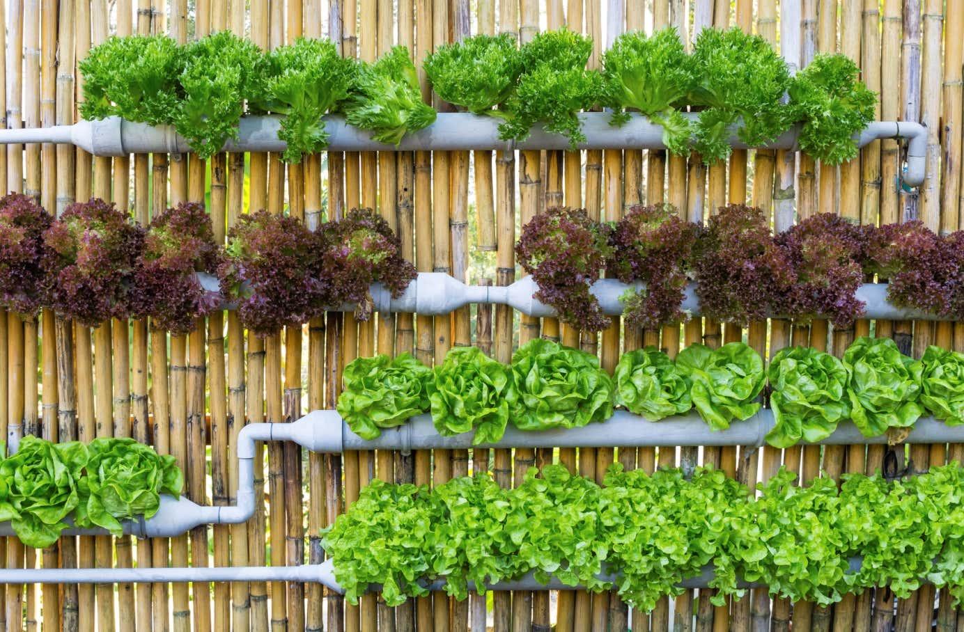 Hängende Gärten: Pflanzen Vertikal Anbauen Vertikale Bepflanzung Ideen Tipps Garten