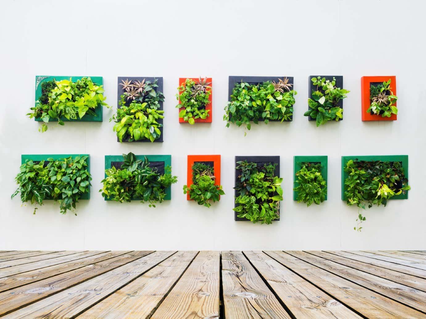 Viele Bilderrahmen ergeben einen Garten