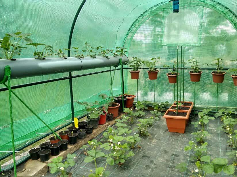 Gewächshaus bepflanzen: Anleitung für den Gemüseanbau