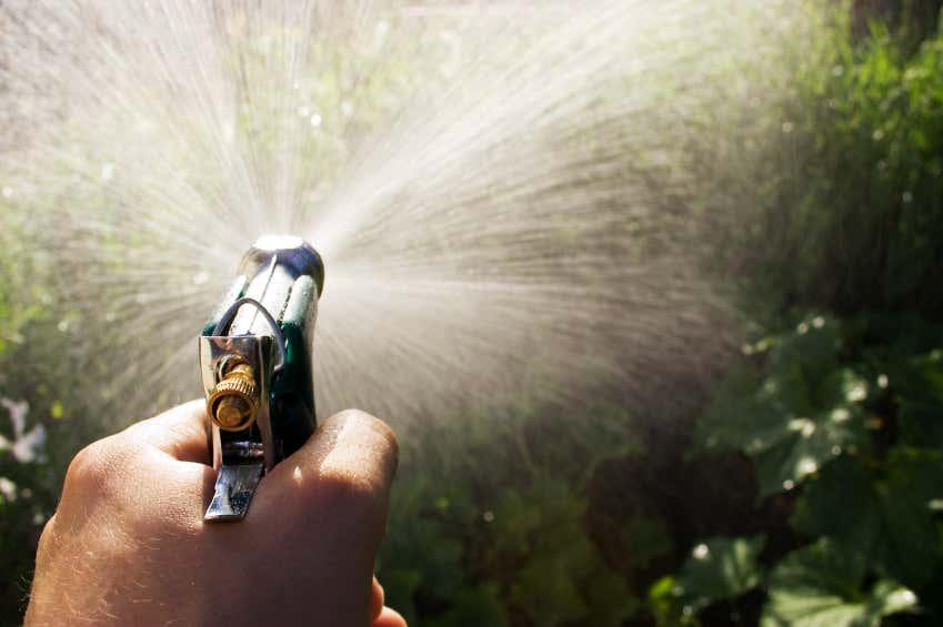 Wasser marsch! Oftmals hilft es schon, die Schädlinge einfach von den Pflanzen zu duschen.