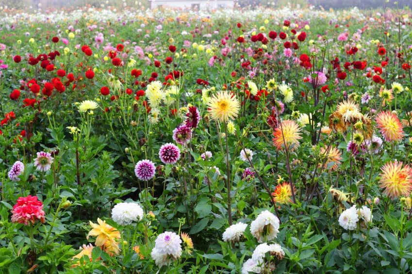 Cottage Garten Bunte Blumen