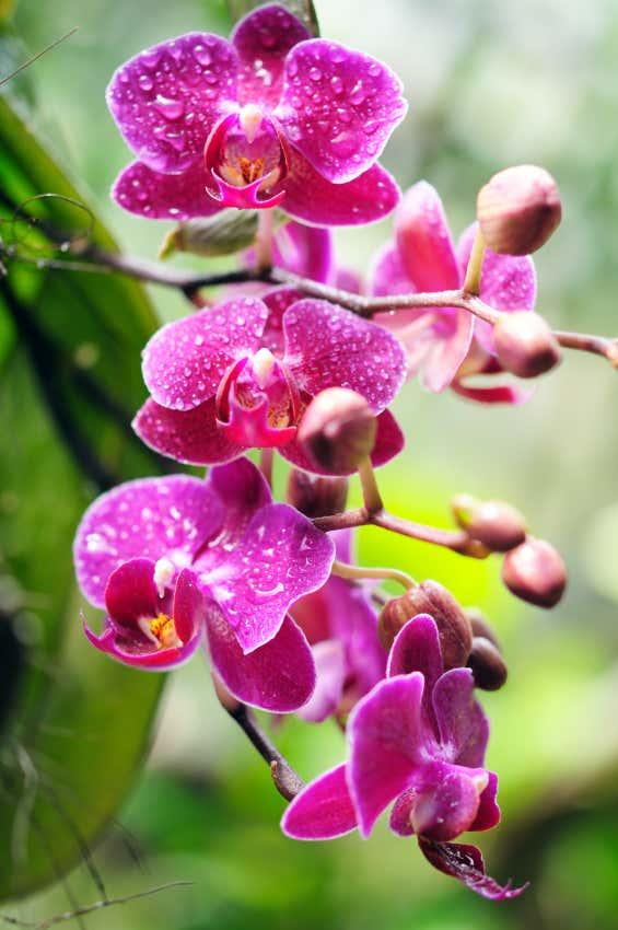 Orchidee im Wintergarten