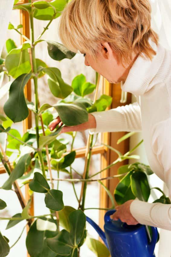 Pflege der Wintergartenpflanzen