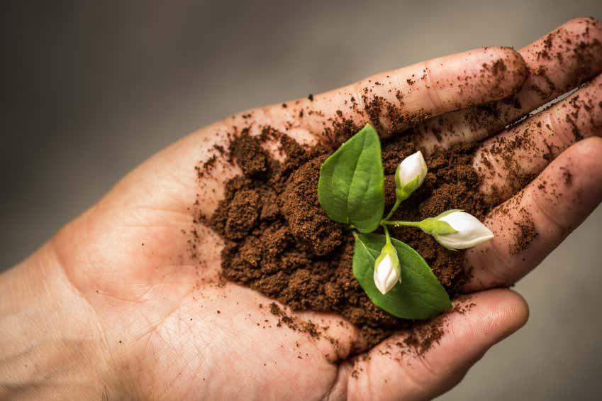 Organischer Dunger Fur Ihren Garten