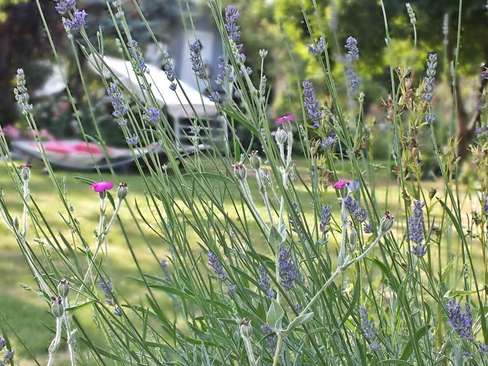 Mein Gartenglück-Garten