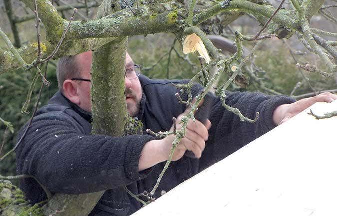 Montage im Apfelbaum