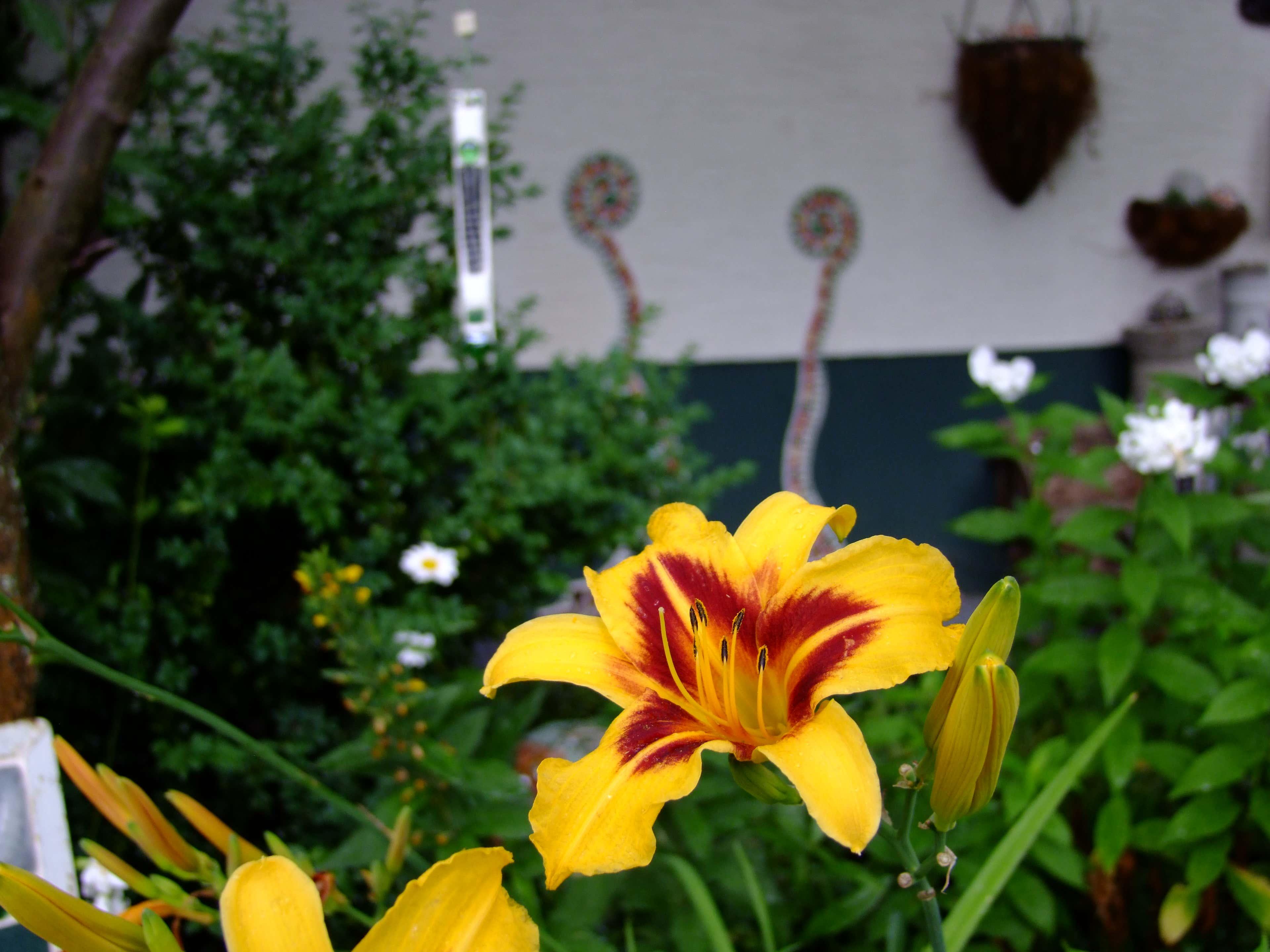 …passt farblich perfekt zu den Taglilien.