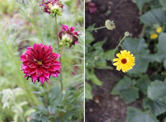 Blumen-rot-gelb