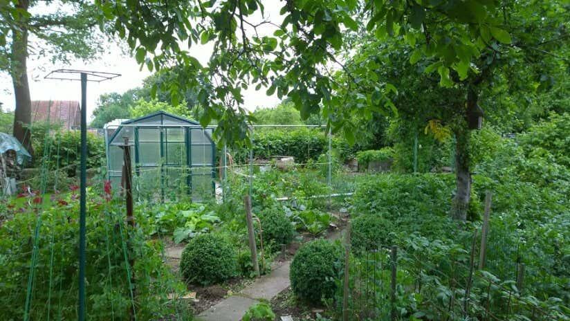 Achims üppiger Gemüsegarten – da geht das Gewächshaus fast unter.
