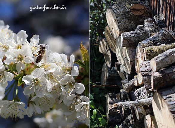 Holz-und-blüten