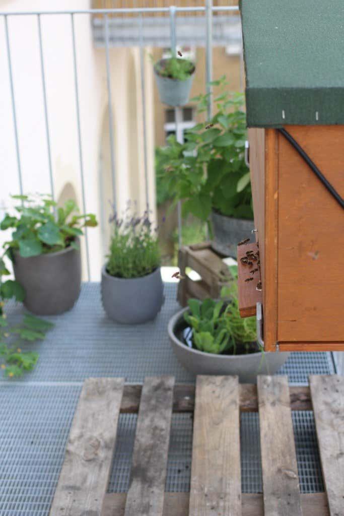 bienen-auf-dem-balkon