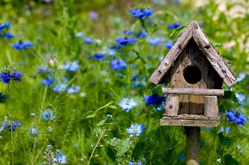 Vogelhaus aus Naturholz