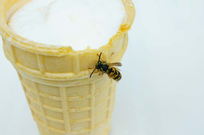 Wespen Vertreiben Diese Mittel Helfen Wirklich