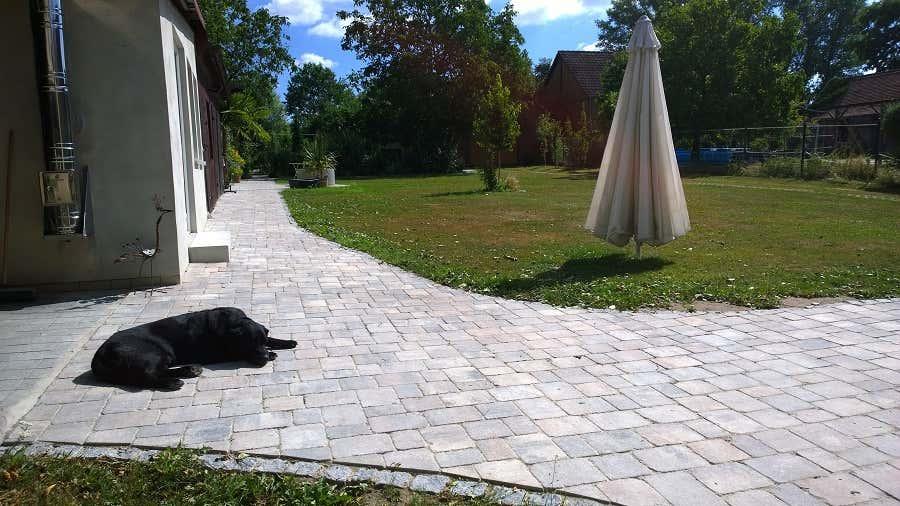 Die neuen Wege: Hund Max fühlt sich überall gleich wohl.