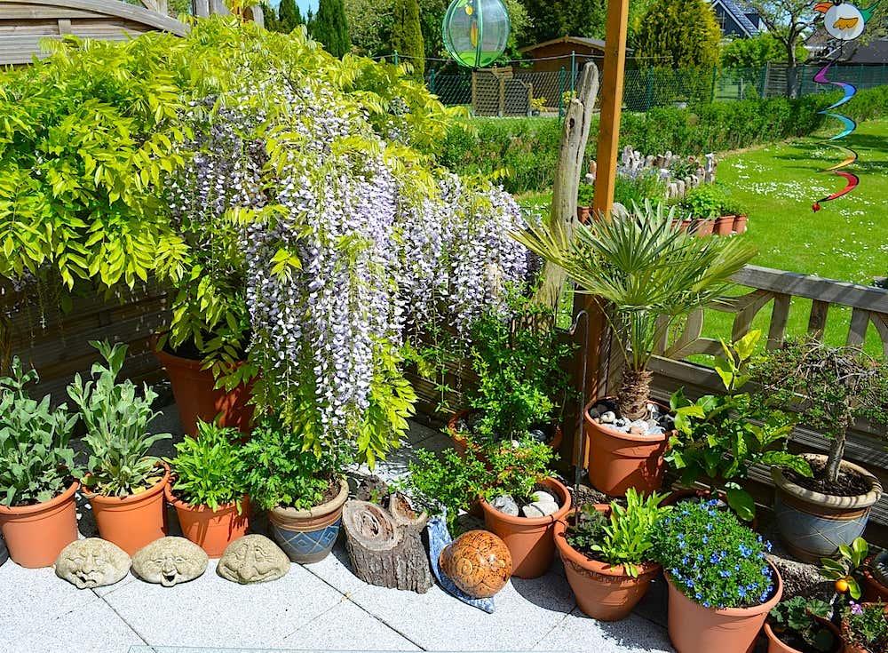 """""""Ich liebe alle Pflanzen, die man in Töpfen auf der Terrasse wachsen lassen kann. Zwischen meinen Zierpflanzen steht auch ein kleiner Apfelbaum, meine Chilis, die Physalis und die Birnenmelone."""""""