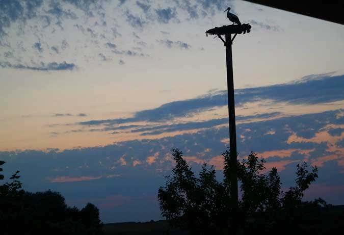 Abendstimmung mit Storch