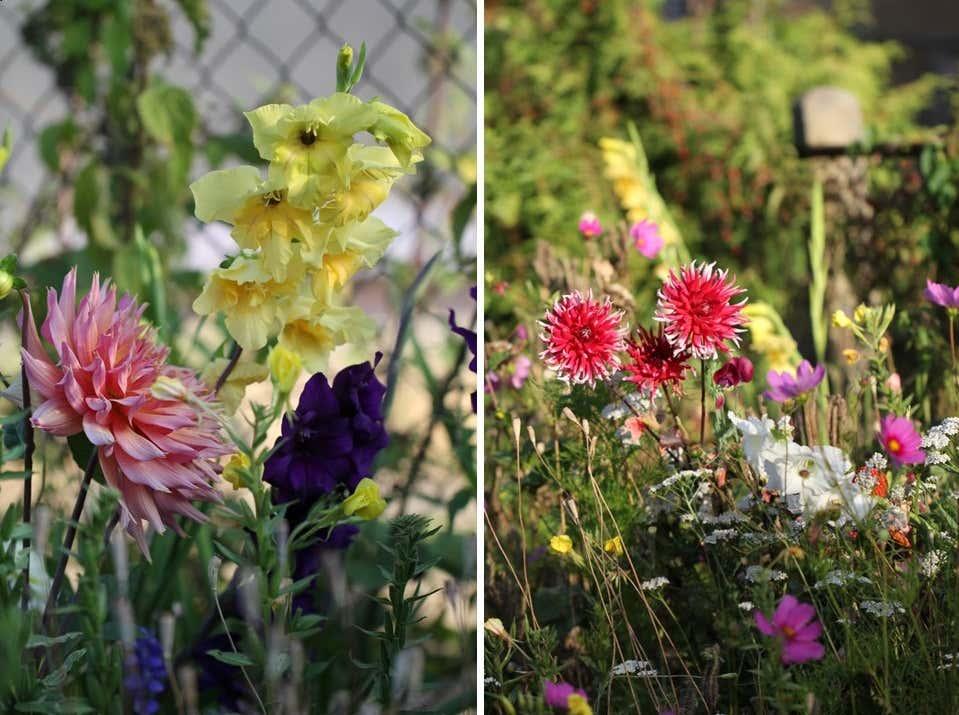 Gartenideen Für Wenig Geld: Elkes Null-Euro-Beet
