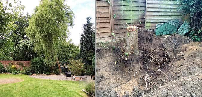 Baum wird entfernt