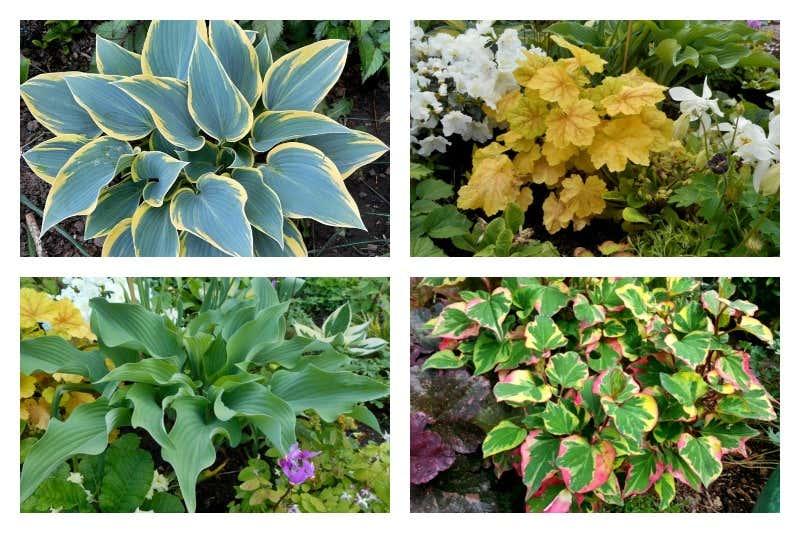 Zierpflanzen im Beet mit schönen Blättern