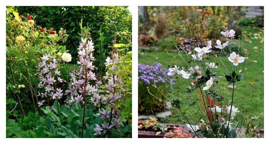 Blumenbeet anlegen traum ideen f r ihr gartenparadies for Gartenecken anlegen