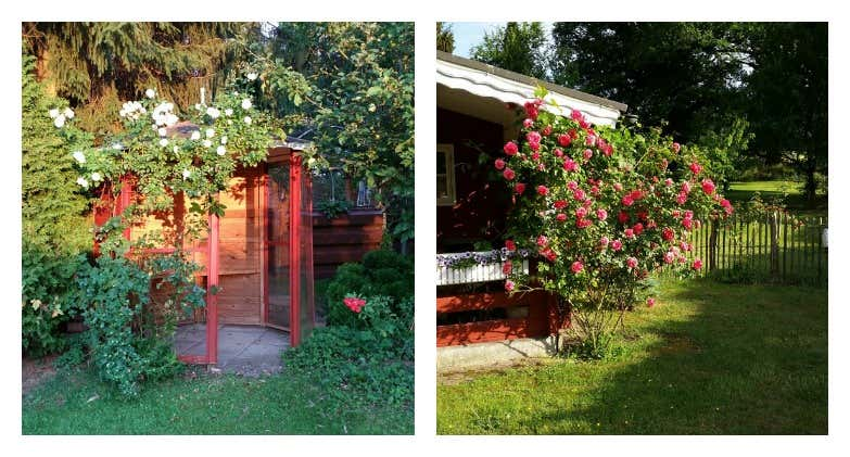 Gartenhaus mit Rosen