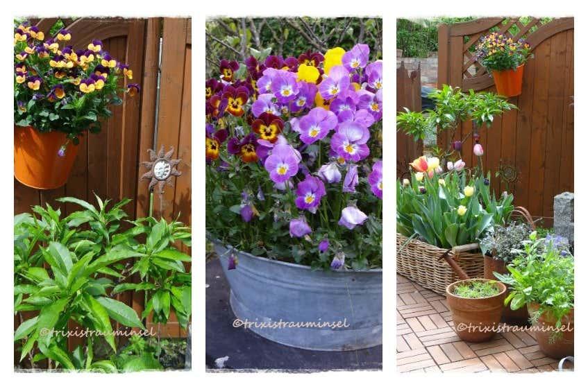 alternative Blumenbeete auf der Gartenterrasse