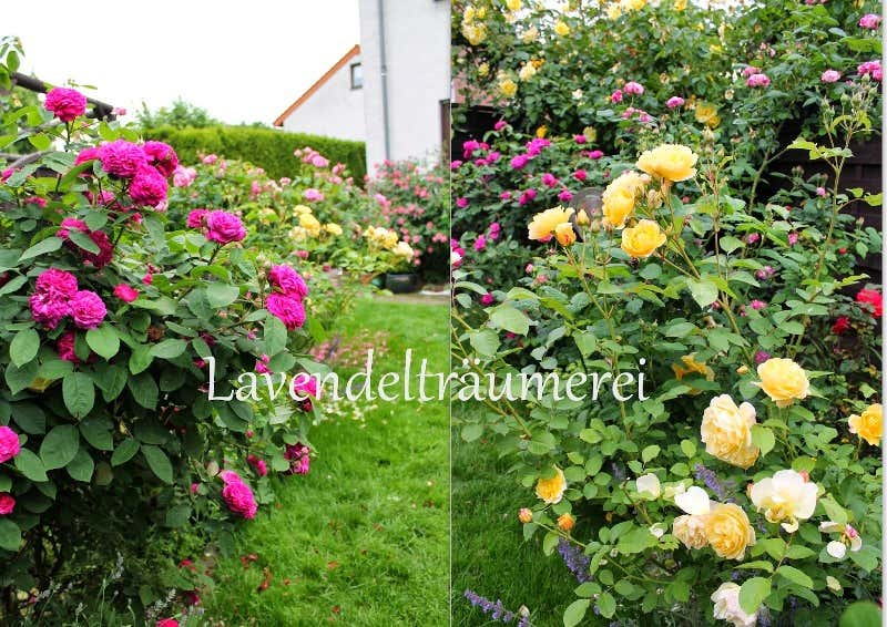 Blumenbeet anlegen traum ideen f r ihr gartenparadies - Gartengestaltung mit rosen ...