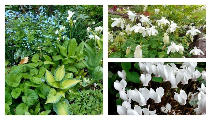 weiße Blümlein im Gartenbeet