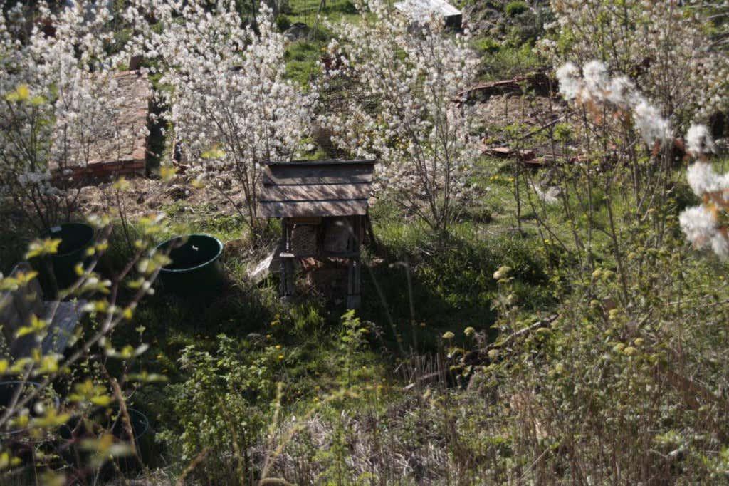 Bienenschwarm im Permagarten