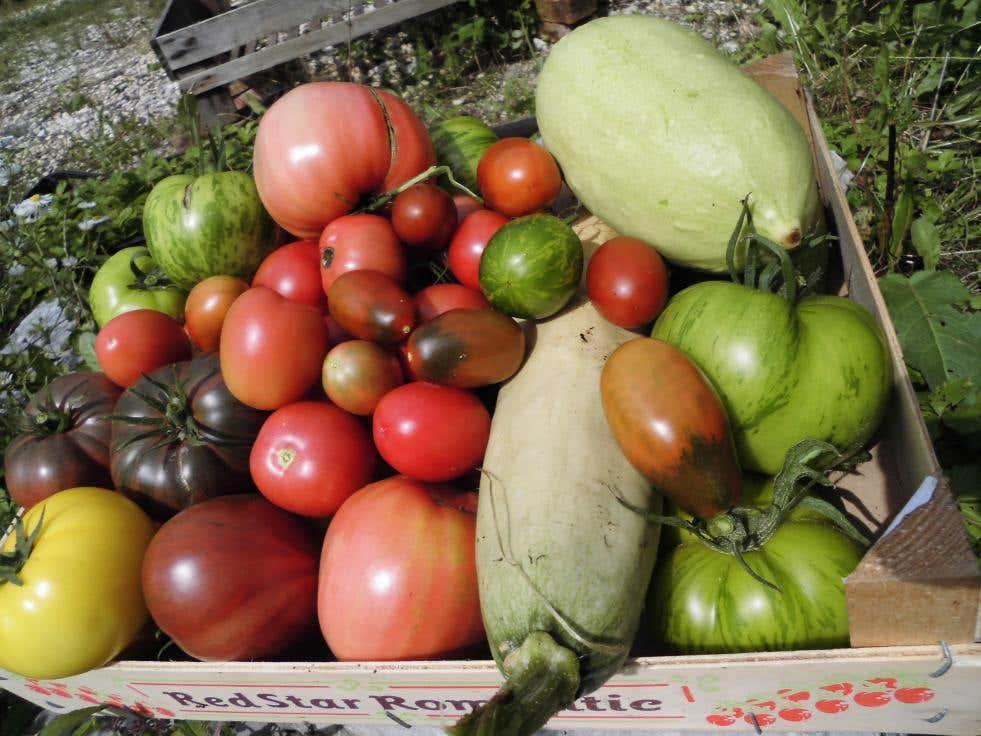 Gemüse aus dem Permagarten