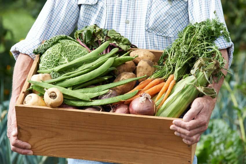 Gemüsevielfalt im Schrebergarten