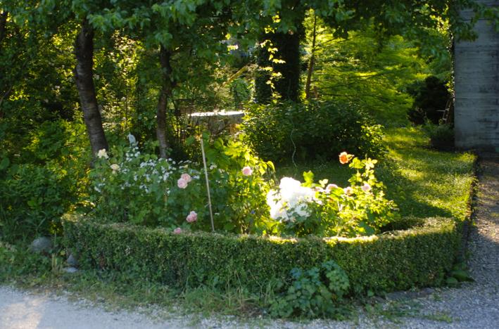 Vorgarten Schatten Rosen