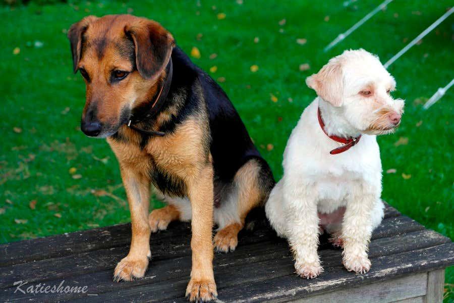Die beiden Hundemädels Betty und Lisa habt den Garten fest im Blick.