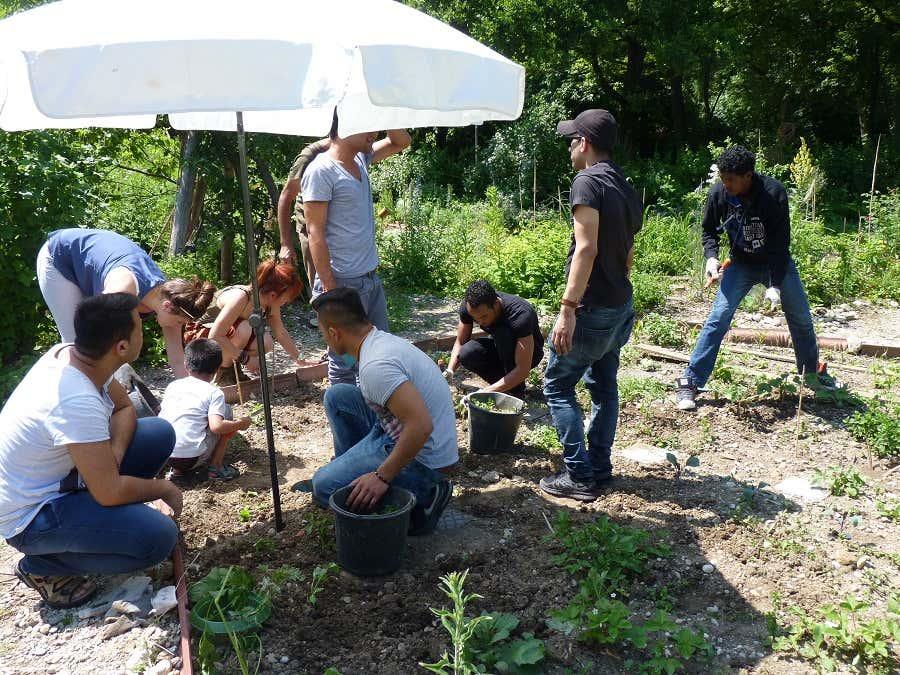 Zusammen säen und ernten – das Bunt-Projekt in München zeigt wie stark Gärtnern verbindet.